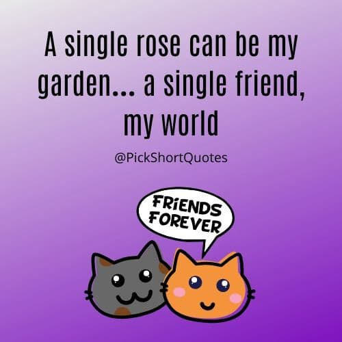 friendship quotes, friendship quotation