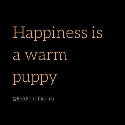 charles schulz quotes, charles schulz quotes about happiness