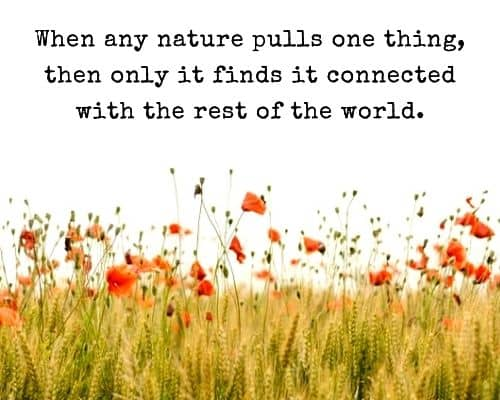 john muir quotes about nature