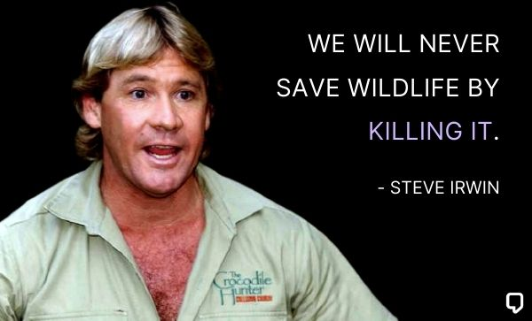 steve irwin quotes about wildlife